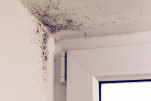 repairman-app-protect-home-mold